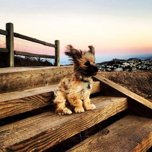جدیدترین عکس حیوانات بامزه