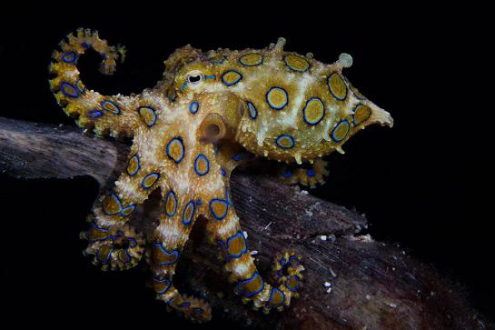عکس جالب حیوانات زیر آب