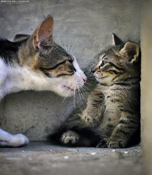 گربه سگ,عکس های گربه