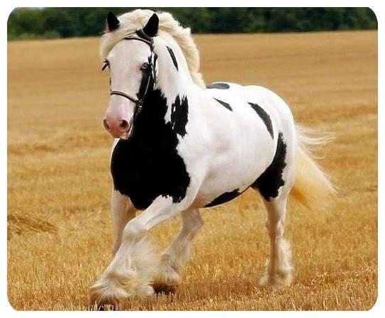 اسب زیبا,عکس های اسب های خوشگل