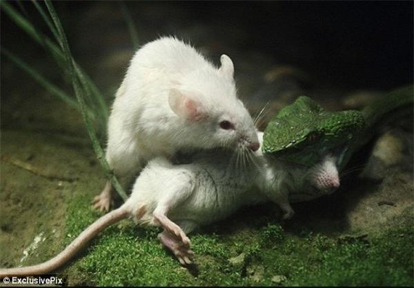 تصاویر واقعی از خودگذشتگی یک حیوان