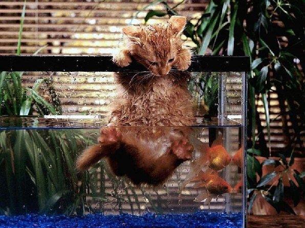 عکس گربه خوشگل