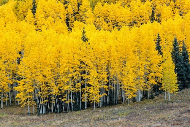توصیف فصل پاییز,عکسهای عاشقانه فصل پاییز