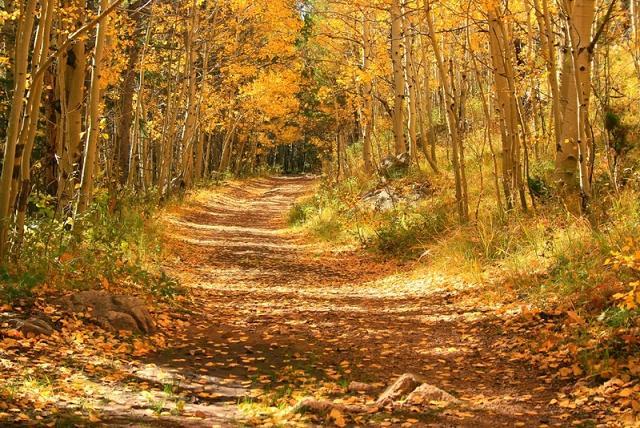 عکس خوشگل فصل پاییز