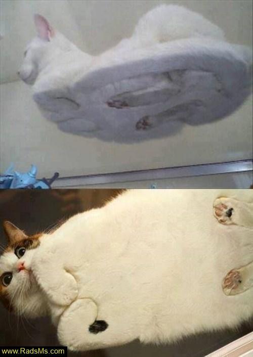 تا حالا گربه رو اینجوری دیدی؟ عکس خنده دار