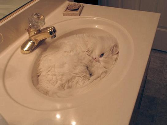 عکس جالب گربه هایی از جنس مایع