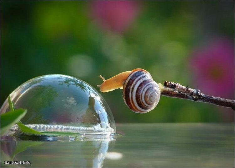 عکس حلزون های شگفت انگیز,عکس های جالب حلزون ها