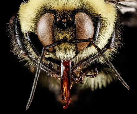 عکس ماکروگرافی حشرات,عکس حشرات جالب