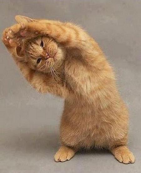 عکس گربه, عکس بچه گربه, گربه سخنگو,