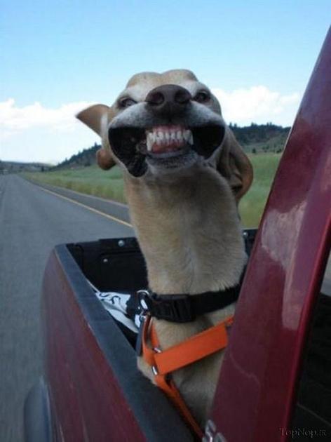 تصاویر خنده د ار,عکس های خنده دار و جالب