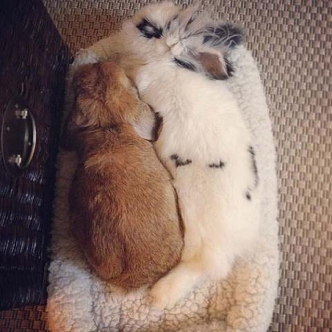 دانلود عکس خرگوش