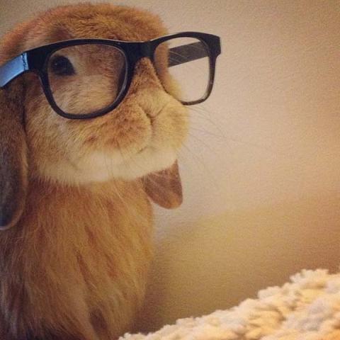 عکس خرگوش خوشگل