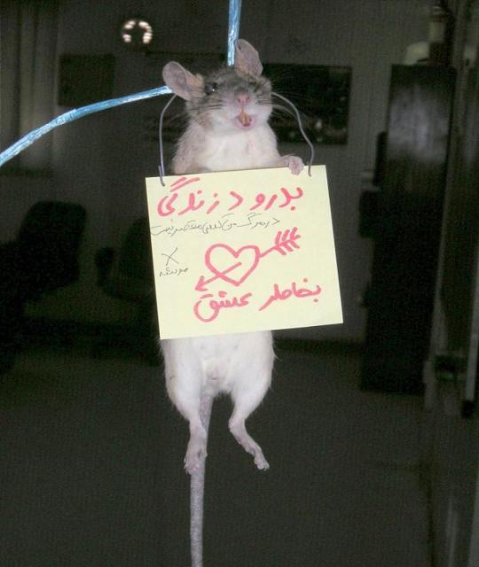 عکس خودکشی به خاطر عشق