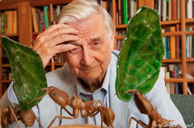درسهایی جالب از زندگی مورچه ها