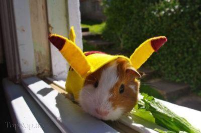 عکس های حیوانات ملوس و بامزه