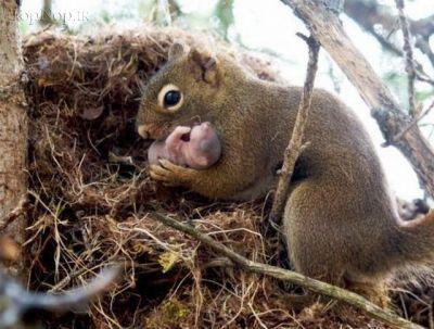 www.ysame.ir -عکس های حیوانات ملوس و بامزه