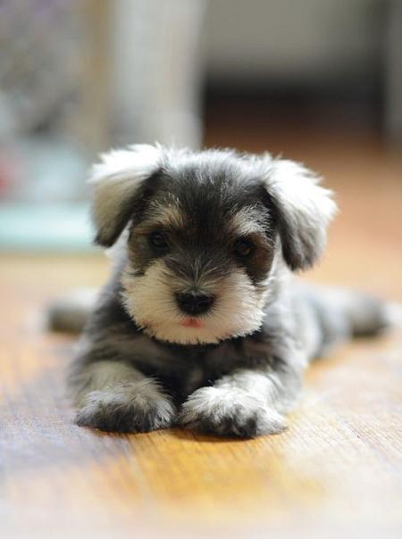 عکسهای سگ