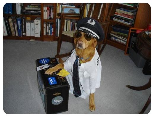 تصاویر جالب سگ ها