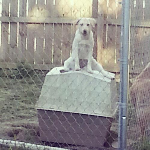 عکس خنده دار سگ