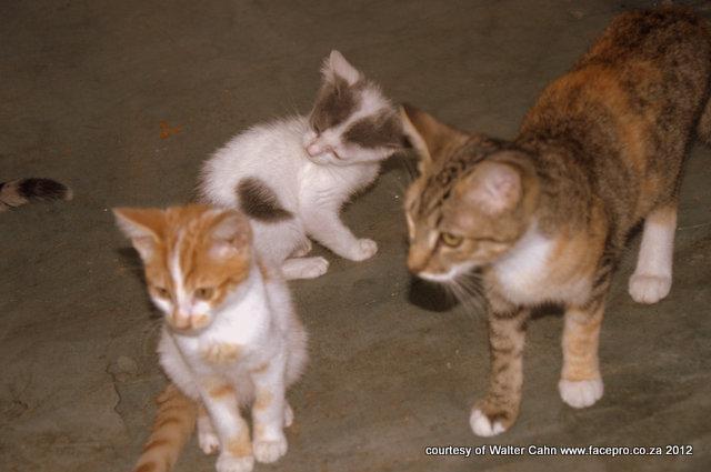 عکس گربه های خوشگل,دانلود عکس گربه