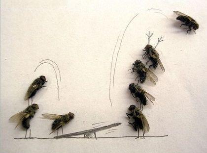 عکس خنده دار هنرنمایی مگس ها,سایت عکس باحال