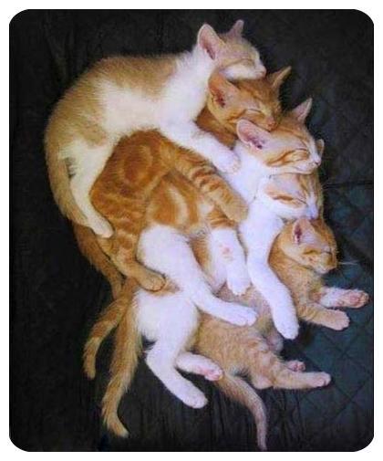 جدیدترین عکس های گربه