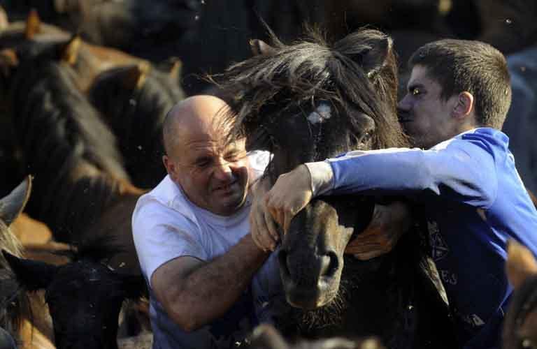 عکس های جالب کشتی گرفتن با اسب,عکس اسب وحشی