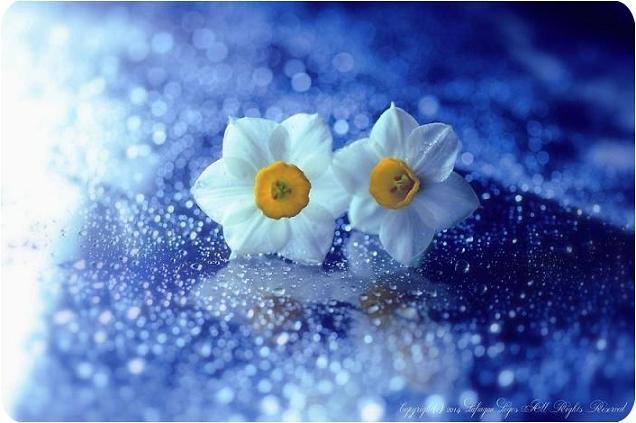 عکس های آرامش بخش گل ها
