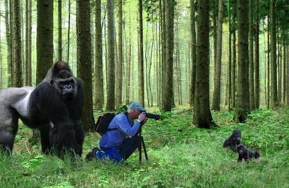 به نظرتون میتونه عکس رو چاپ کنه؟