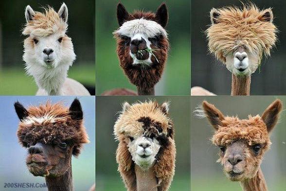 مدل موهای فشن پسرها _ عکس خنده دار