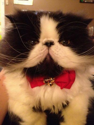 سری جدید عکس های گربه