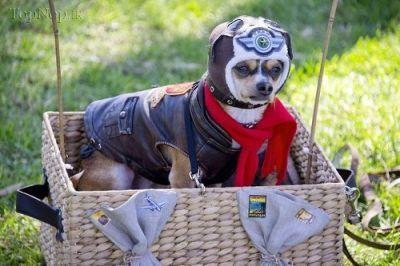عکس سگ های خوشتیپ و ناز,گالری عکس های خوشگل و قشنگ