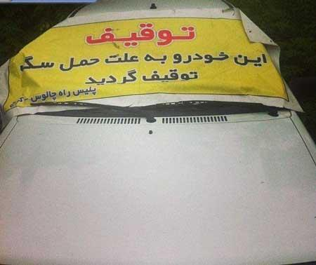عکس سوجه های خنده دار ایرانی,سوتی خنده دار ایرانی