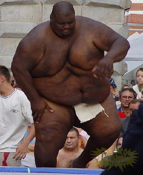 rahafun.com sumo tournament 27 عکس های جالب کشتی سومو Sumo