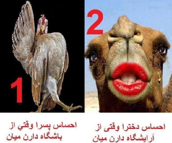 عکس خنده دار - تفاوت احساس دختر و پسر