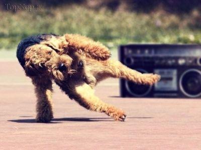 عکس خنده دار حیوانات در حال رقصیدن