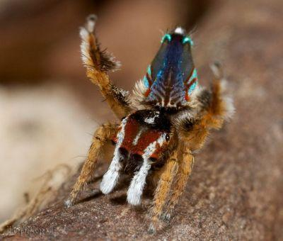 rnJ67dB5pv عکس خوشگل ترین عنکبوت جهان