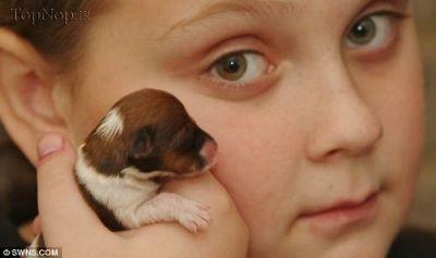 عکس کوچکترین توله سگ دنیا