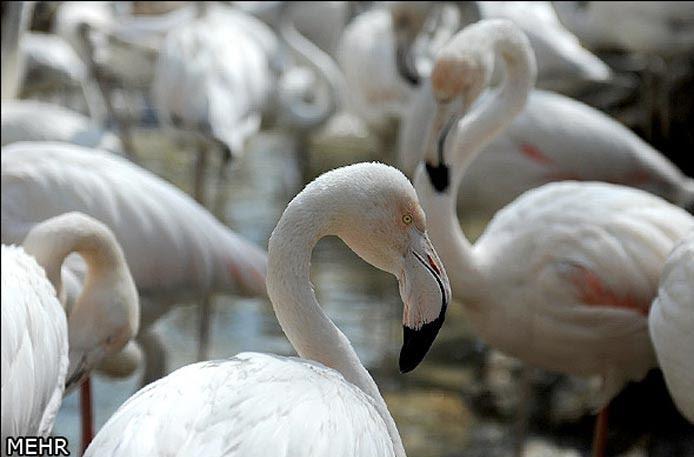 عکس باغ پرندگان