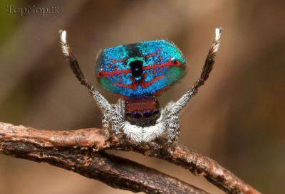 vLACqhxJ70 عکس خوشگل ترین عنکبوت جهان