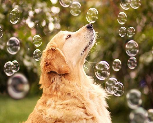 عکسهای هنری یک سگ