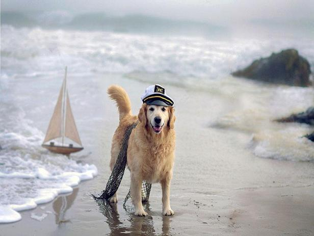 عکس های سگ
