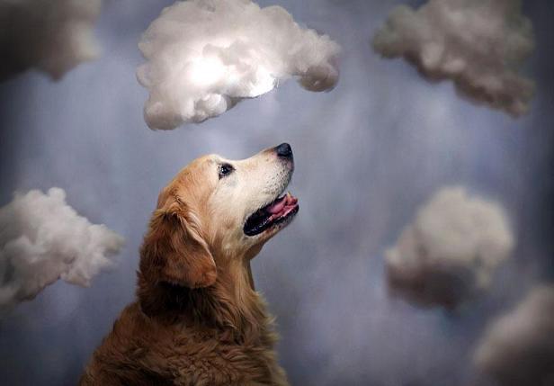 عکس چالب سگ