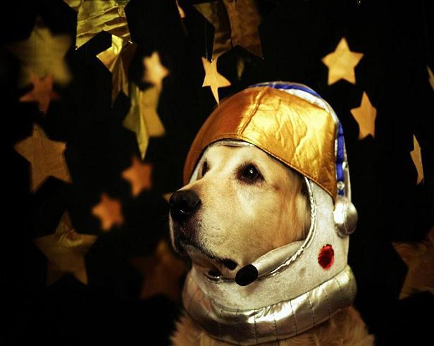 عکس های جالب سگ
