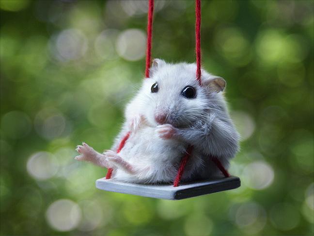 عکسهای همستر Hamster