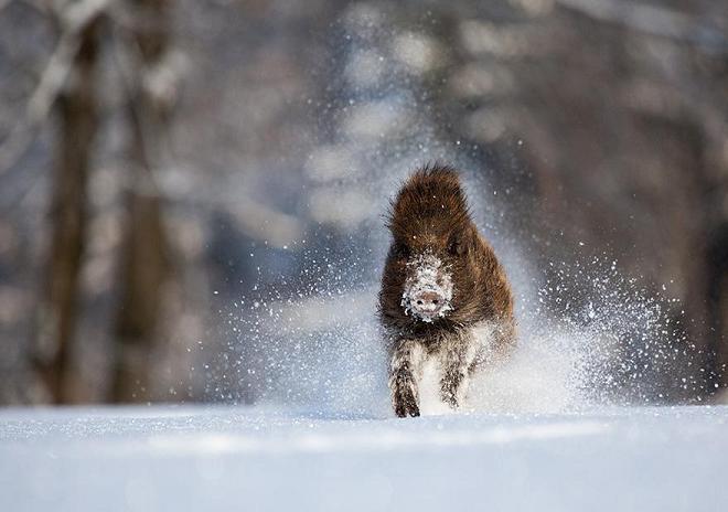 عکسهای جالب حیوانات در فصل زمستان