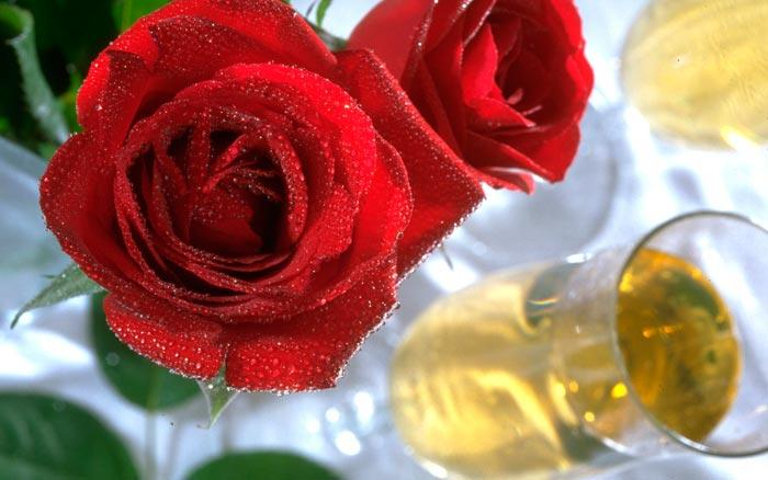 عکس های زیبا گل رز