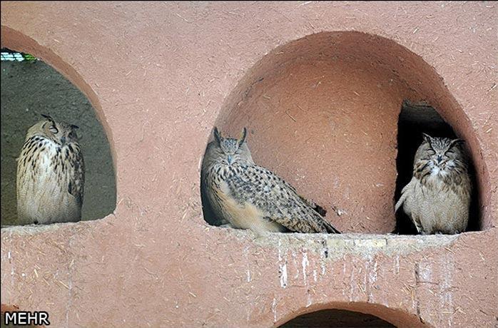 عکسهای دیدنی باغ پرندگان