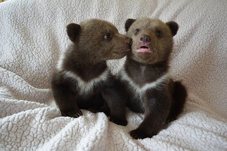 عکس بچه خرس