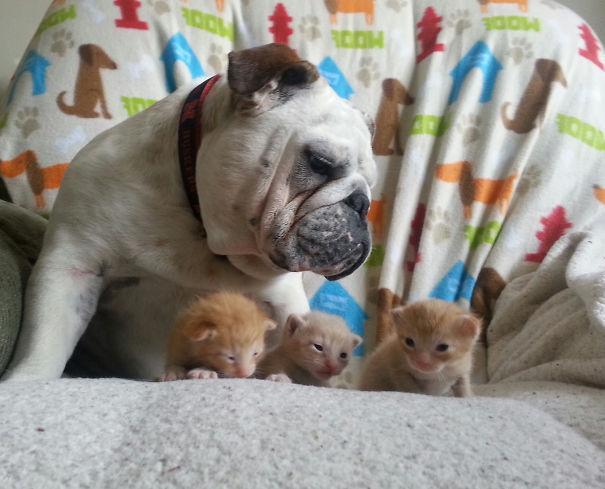 عکس های سگ و گربه